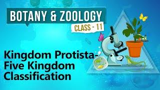 Kingdom Protista - Five Kingdom Classification - Diversity in Organisms - Biology Class 11
