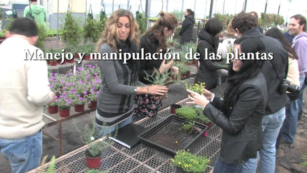 Curso intensivo de jardines verticales en argentina 2012 for Jardines verticales