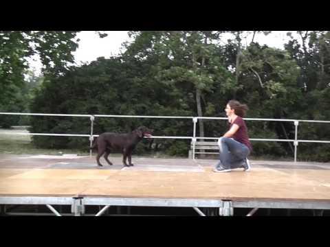 Comment je travaille un dog show ?