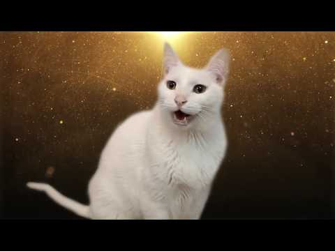 Despacito - Cats Version - Versión Gatos