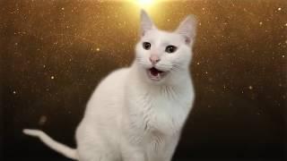 Download Despacito - Cats version - Versión Gatos Mp3 and Videos