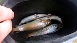 Вторая серия рыбалки на реке Черный Июс 5 сентября 2019г