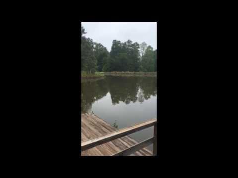 Alabama Bigfoot growls