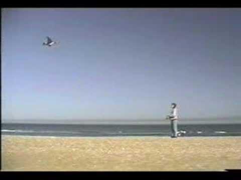 Jackite Mallard Drake Bird Kite Duck Decoy