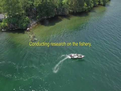 Drone Tour of ESF 1000 Islands Biological Station