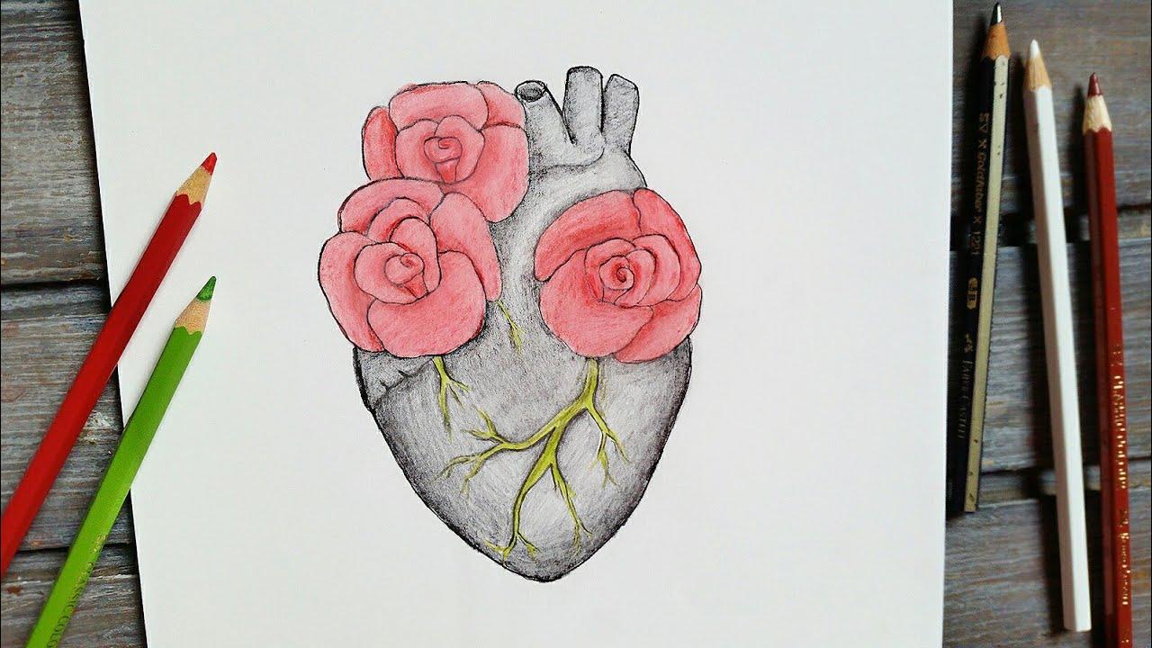رسم سهل تعليم رسم ورود مع قلب بقلم الرصاص بطريقة سهلة وبسيطة Youtube
