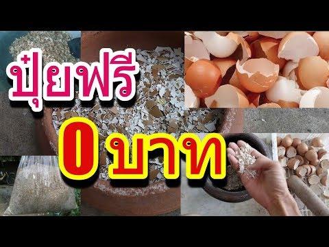 แชร์!!!การทำปุ๋ย 0 บาท จากเปลือกไข่ ใช้ดีจนผักงามกินไม่ทัน!!!