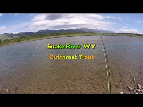 Fly Fishing for Cutthroat Trout - Snake River, WY
