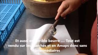 La Laiterie de Paris à la Ferme de Logodec, au milieu des vaches Bretonnes Pie Noire