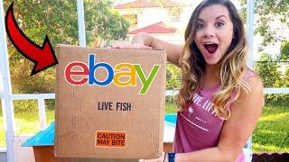 ONLINE EBAY SHOPPING For HUNDREDS of LIVE AQUARIUM FISH!