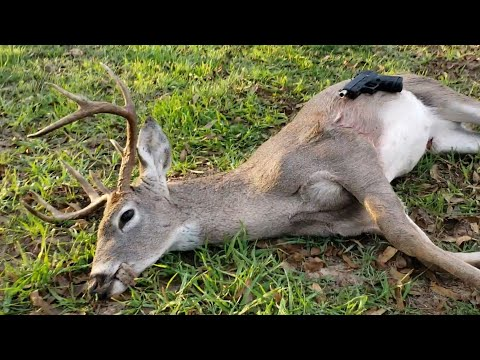 Deer Hunting With A Glock! (Heart Shot)