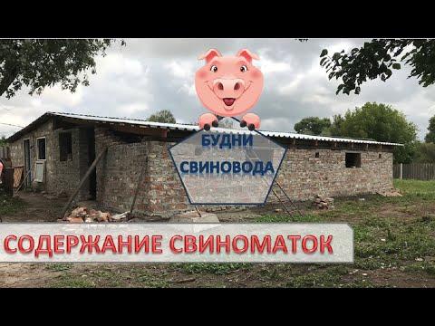 Сарай для свиней//свинарник//навозоудаление в сарае!