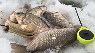 карася на мормышку зимой У меня еще никогда не было такой рыбалки улов гарантирован 100