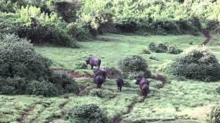 видео Поездка в Кению