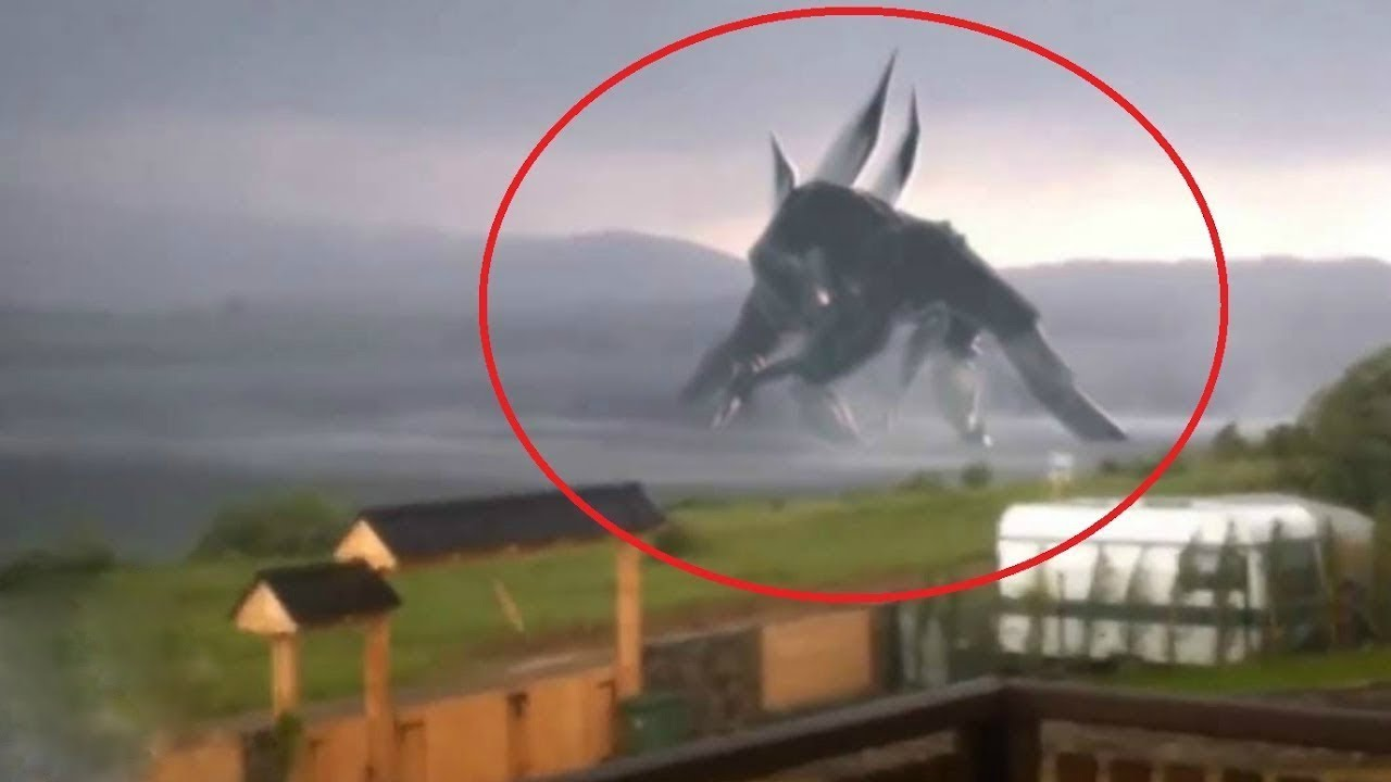 5 Giant Creatures Caught On Camera Youtube