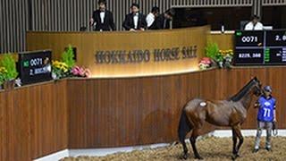 1歳馬競り市 売却総額初の20億円超 新ひだか(2015/07/21) 北海道新聞