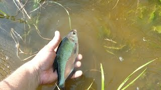 Рыбалка на ручье.