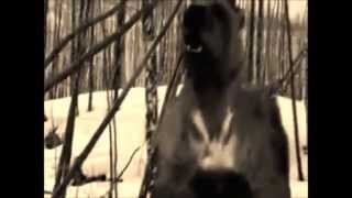 Arctodus The Death Bear