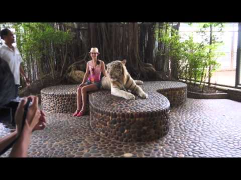 Photo with white roaring tiger (The Million Years Stone Park & Pattaya Crocodile Farm in Thailand)