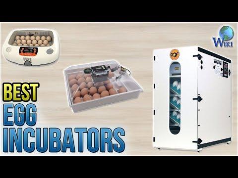 9 Best Egg Incubators 2018