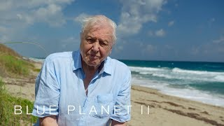 SUBSCRIBE for more BBC highlights: https://bit.ly/2IXqEIn Programme website: http://bbc.in/2BRYqIA Sir David Attenborough gives his closing message for the Blue Planet II series.