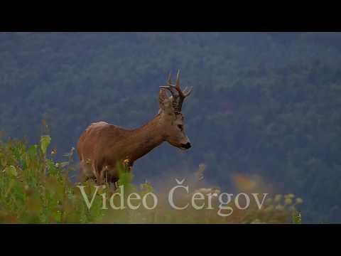 Srnec - video Čergov