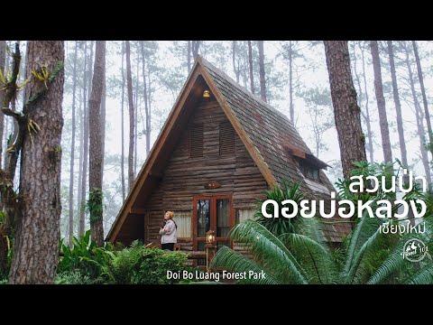 เที่ยวสวนป่าดอยบ่อหลวง สัมผัสธรรมชาติป่าสน เชียงใหม่ | Travel 101 | Doi Bo Luang Forest Park SS2:Ep1