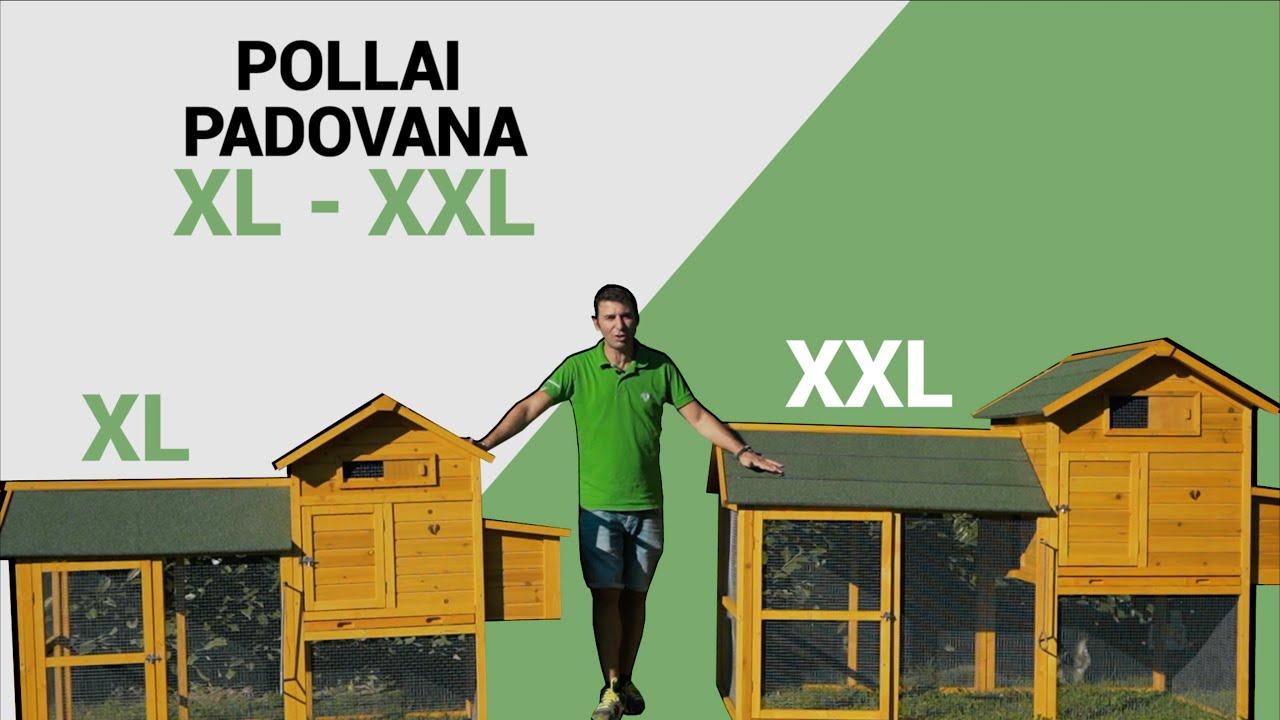 Pollai da Giardino in Legno con tetto Bituminato Padovana XL e Padovana XXL