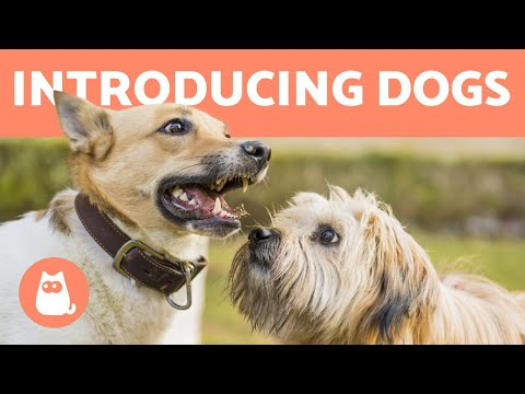 How to Introduce Two Dogs 🐶 Meeting for the First Time