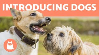 How to Introduce Two Dogs  Meeting for the First Time