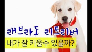 【펫을부탁해】「펫을부탁해」#펫을부탁해,[강아지소개]래브...