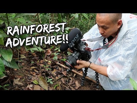 RAIN FOREST ADVENTURE IN SAINT LUCIA | Vlog #158