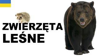 Польська для початківців - Лісові тварини (Zwierzęta leśne)