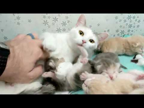 2018-09-23 Verse and Kittens