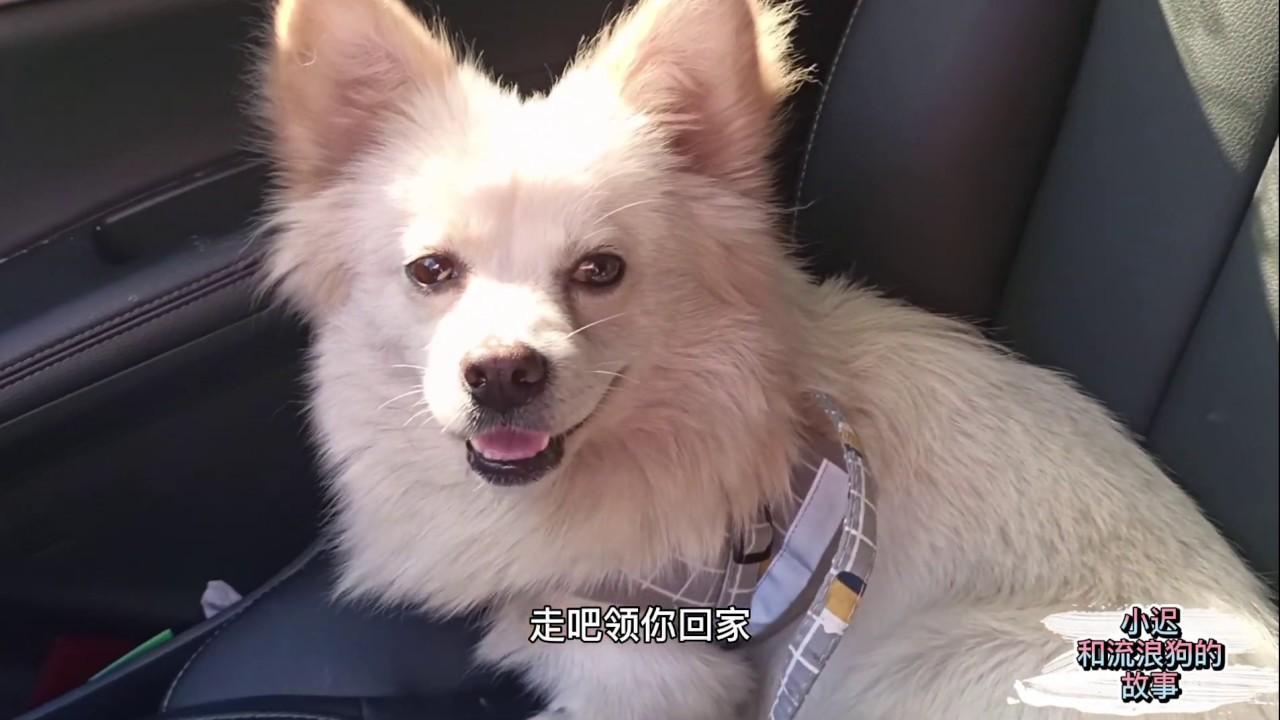 小遲和流浪狗的故事81 — 蝴蝶犬流浪街頭,小遲全力幫它找尋主人,為它尋找回家的路 - YouTube