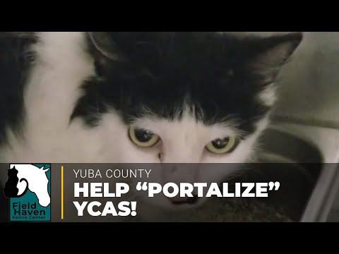 Portalize Yuba County Animal Services   FieldHaven Feline Center