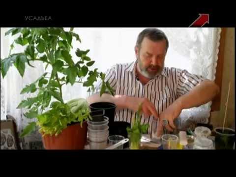Блюда из сельдерея, рецепты с фото на : 819