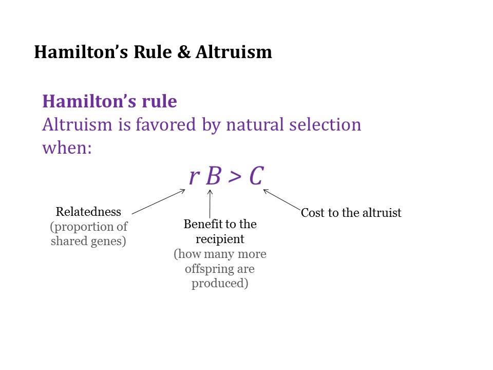 kin selection vs multilevel selection Multilevel and kin selection in a connected world nature 463: e8-e9 (crítica ao artigo anterior seguida de resposta de wild et al) tema 6 bar-yam y (2003.