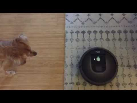 The Roomba® 980 30-Day Throw Down: Furry Floors