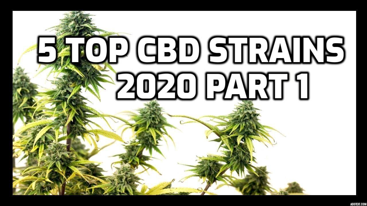 5 Best High CBD   low THC Strains 2020 Pt 1