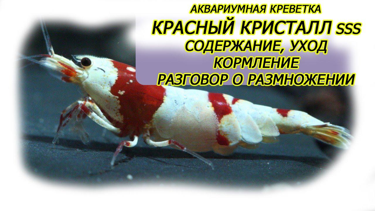 Поздравление на новорожденного по татарский 103