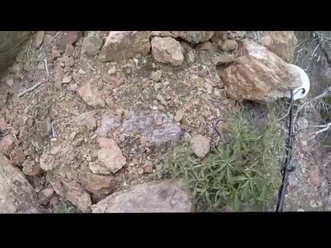 Gold Detecting in Big Bear - Gold Mountain gold Mine