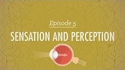 Sensation and Perception: Crash Course Psychology #5
