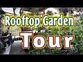 - Rooftop Garden Tour - Kebun Di Atas Rumah