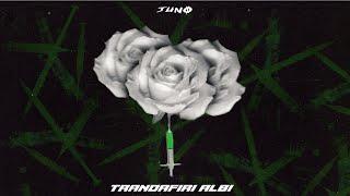 Descarca JUNO - Trandafiri albi (Orginal Radio Edit)