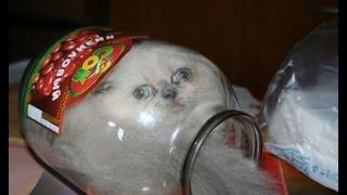 Смешные кошки и коты 2014 - Funny cats and cats 2015