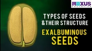 Types of Seeds and their Structure- Exalbuminous seeds