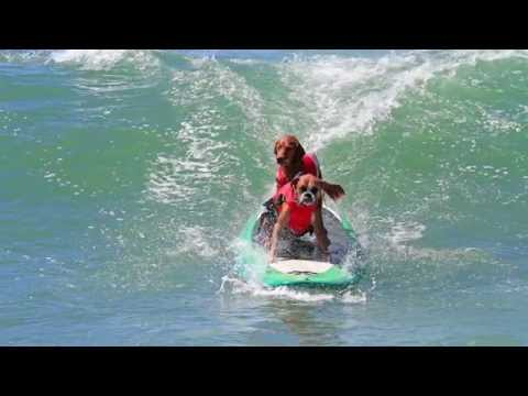 Hanzo and Kalani ride Tandem at Surf City Surf Dog 2014