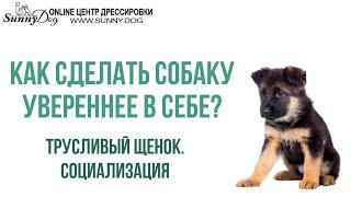 Очень трусливый щенок. Как помочь собаке стать увереннее в себе? Социализация щенка