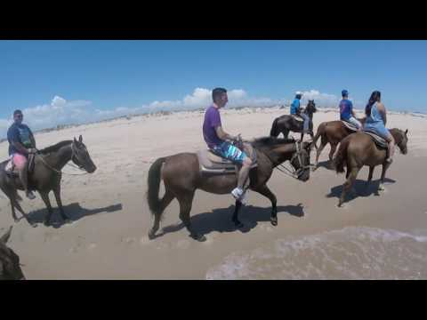 Horseback Riding in Padre Island!